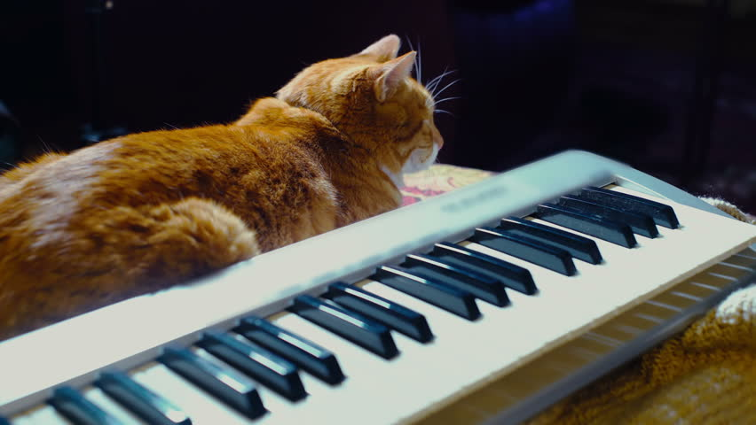 Petting a cat next to a piano