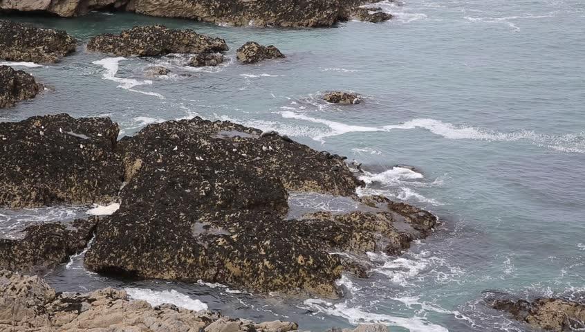 Rocks In Spanish Part - 45: Seals Resting On Rocks Coast Of Cornwall Resting On Rocks At The Kelseys  Near Holywell Bay