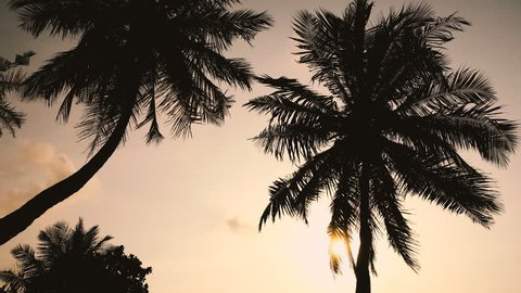 Sunset with coconut palm tree leaf silhouette. Travel destination