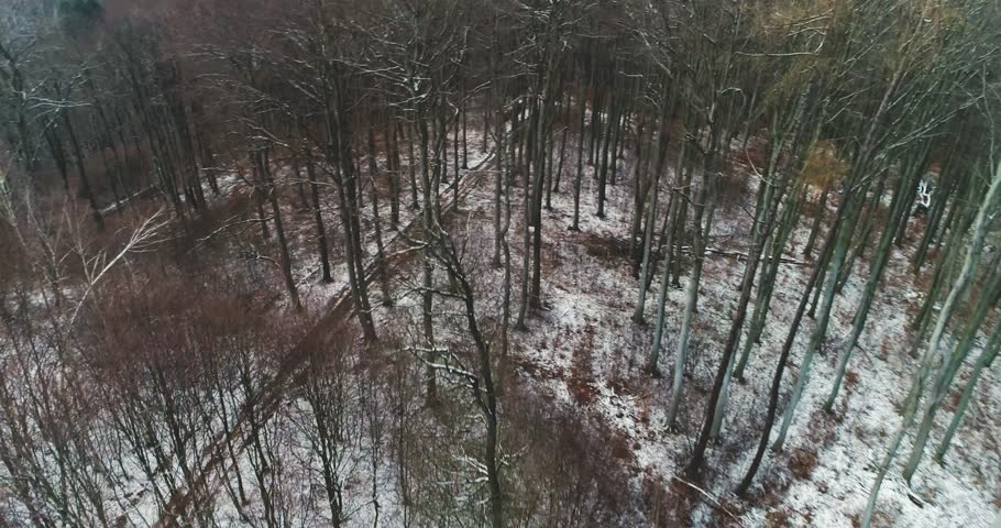 Drone flight over birch forest in january with little snow | Shutterstock HD Video #1006774666