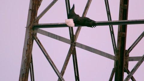 bald eagle landing on tower