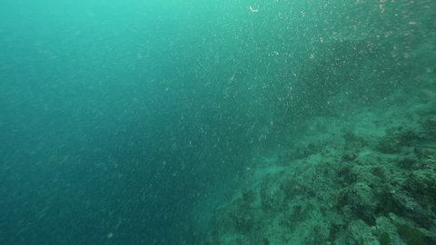 Coral reef bad visibility underwater from plankton, sand and silt during rainy season