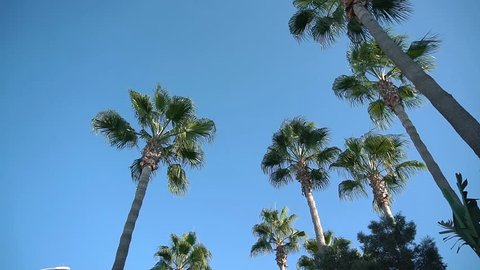 Palmtrees in the blue sky. Cyprus