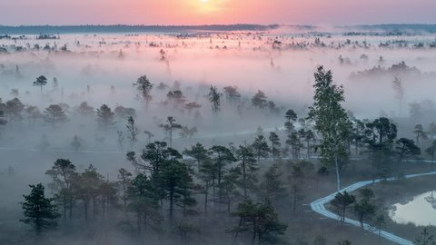 Epic shot of the Sun rising and thick fog flowing over the wetlands of ?emeri National Park, Latvia