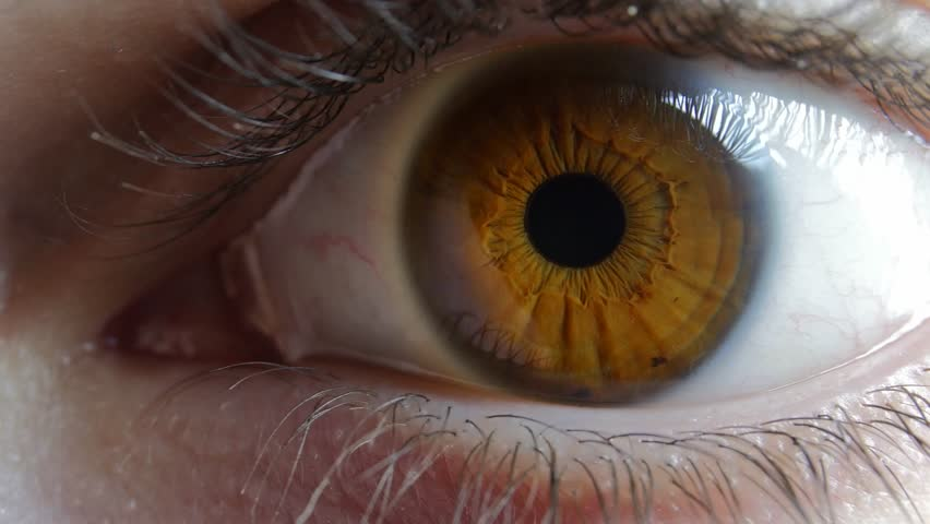 Male Brown Eye Close Up Extreme Macro Zoom In Iris 4K Real Time