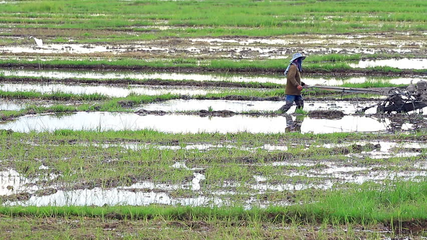 Asian farmer working on rice field outdoor in Agricultural town of Asia. | Shutterstock HD Video #1007126896