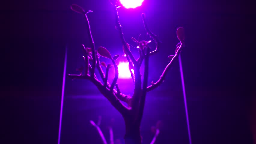 The Plant Under Led Lamp Special Spector. Ultraviolet Lamp. Lamp For Plant  Growth.