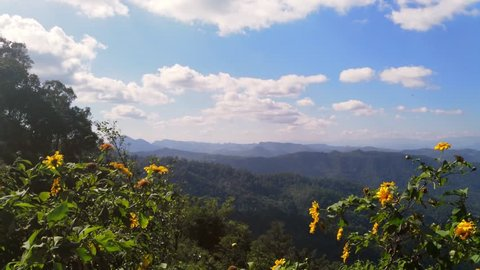 Asian mountains, UHD pan view of flowers at kiew lom viewpoint, on a sunny autumn day, in the mountainsn near Pai, in Thailand