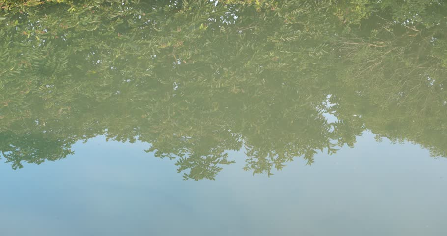 Reflection of the lake in forest | Shutterstock HD Video #1007299486
