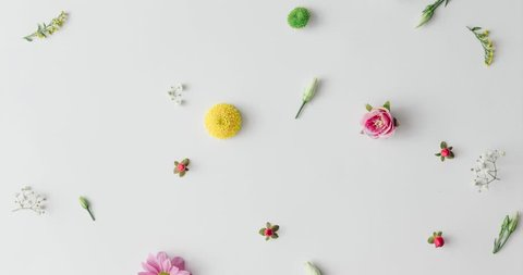Various colorful spring flowers creating pattern on bright background. Flat lay stop motion animation. Nature concept.