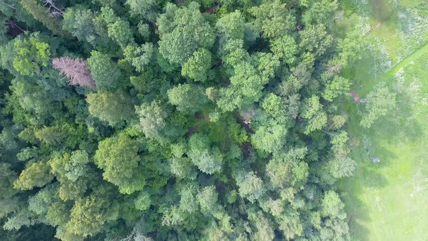 Gauja National Park overhead aerial view of meadows.   Shutterstock HD Video #1007397046