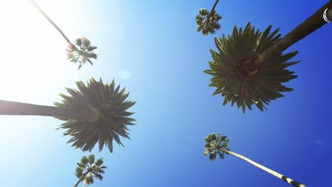 Palm trees passing by a sunny clear sky. Driving through the sunny Beverly Hills. Los Angeles, California.