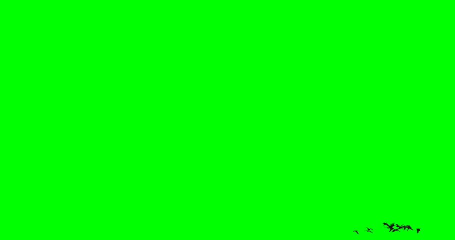 Free Green Screen Stock Video Footage - (2,613 Free Downloads)