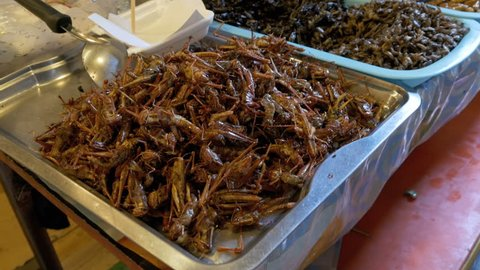 Different types of Cooked insects on a plate at food market. Counter with plates of insects. Asian market. Pattaya, Thailand.