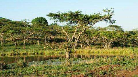 Wonderful Drakensberg mountains landscape  with waterhole at  sunrise. The waterhole is surrounded by a herd of gazelles