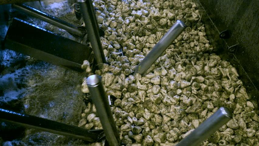 Industrial equipment. Processing sugar beet at a sugar refinery. 4K   Shutterstock HD Video #1007712262