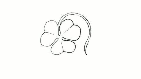 Symbols for Fortune and Luck, Motion Clip of Illustration Hand Drawn Sketch of Fresh Four Leaf Clover Plants or Shamrock for St. Patricks Day Celebration.