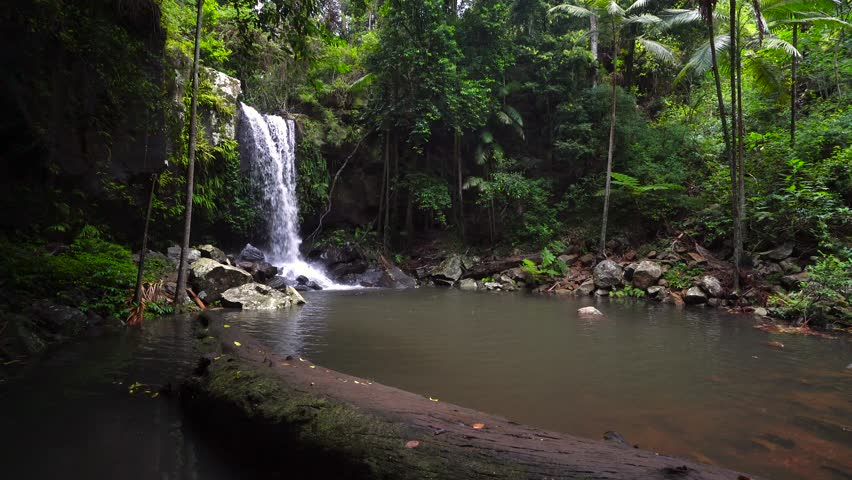 Curtis Falls is a popular waterfall for tourists and locals to visit on Mount Tamborine in the Gold Coast, Queensland, hinterland. Australian rainforest.