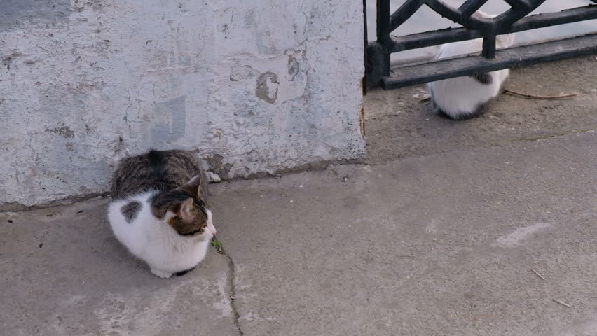 Two hungry cats are waiting for fishermen's catch | Shutterstock HD Video #1007893396