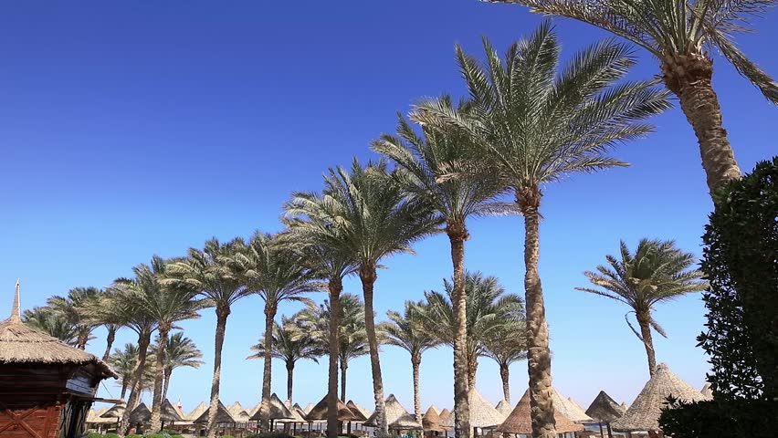 Sharm-El-Sheikh, Egypt, row of palm trees on a coast, blue sky