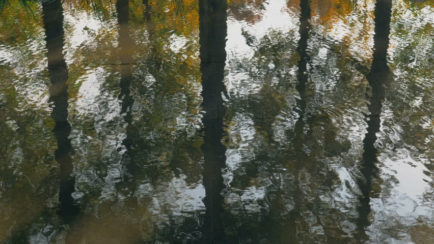 Trees mirrored in water | Shutterstock HD Video #1008094246