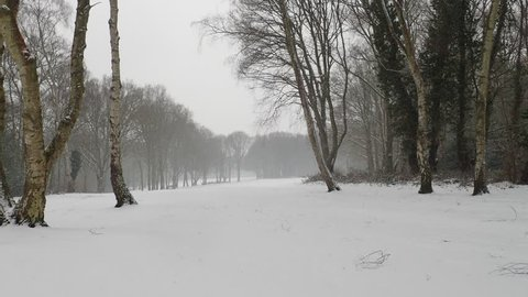Chorleywood Common during heavy snowfall, Hertfordshire, UK