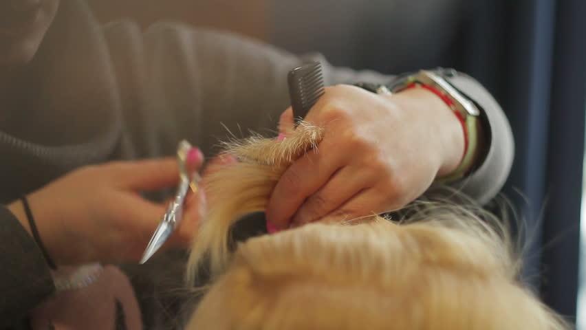Header of shears