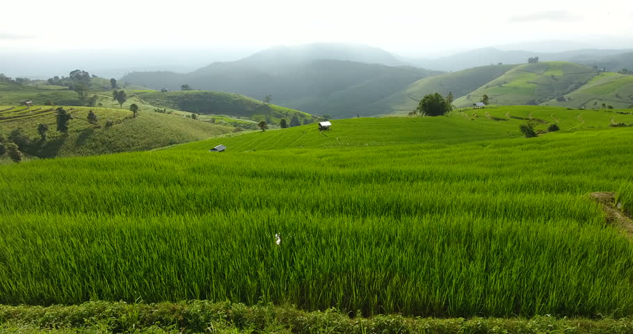 Asian rice field terrace on mountain side, lush agriculture land. Rice is the staple food of Asia and part of Pacific. #1008278116