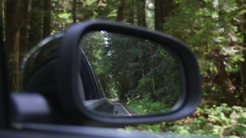 View out the rearview mirror as car drives through redwood forest