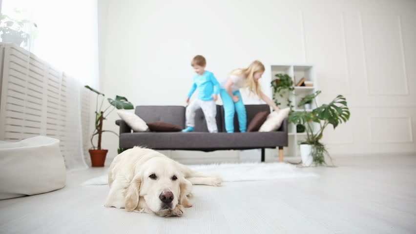 Brother and sister playing with pillows on the couch in the living room. the golden retriever lies on the floor. life of domestic pets in the family. focus on the dog. | Shutterstock HD Video #1008407686