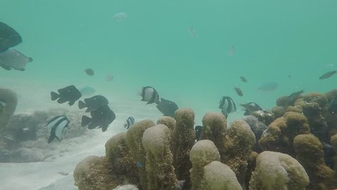 Underwater reef in Jambiani Beach in Zanzibar Island, Tanzania. Diversity of exotic fishes in the Indian Ocean.