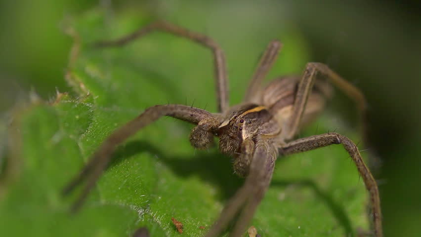 facing fears of spiders Facing your fears spiders: facing your fears spiders news video on one news page on tuesday, 31 october 2017.