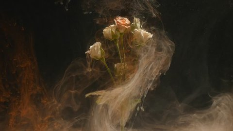 Amazingly wonderful atmospheric shot of a beautiful rose mixing with ink in water