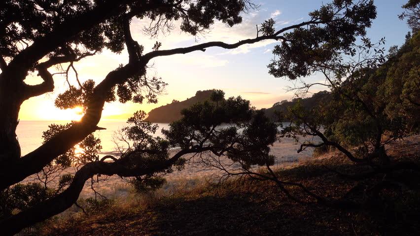 Sunrise through pohutukawa trees on idyllic white sand beach, Coromandel Peninsula, New Zealand