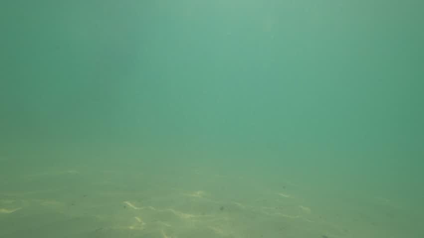 Underwater sea scene   Shutterstock HD Video #1009127996