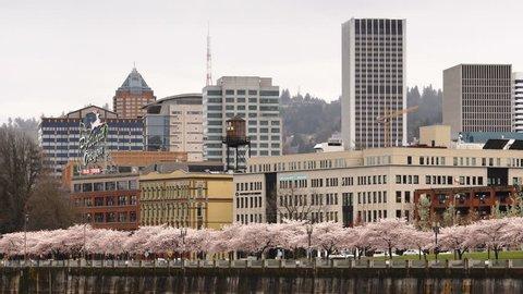Portland Oregon City Skyline Spring Cherry Blossoms Willamette River