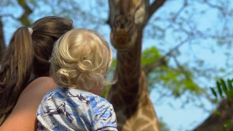 Funny woman feed a giraffe holding a peace of carrot in her lips in a safari park