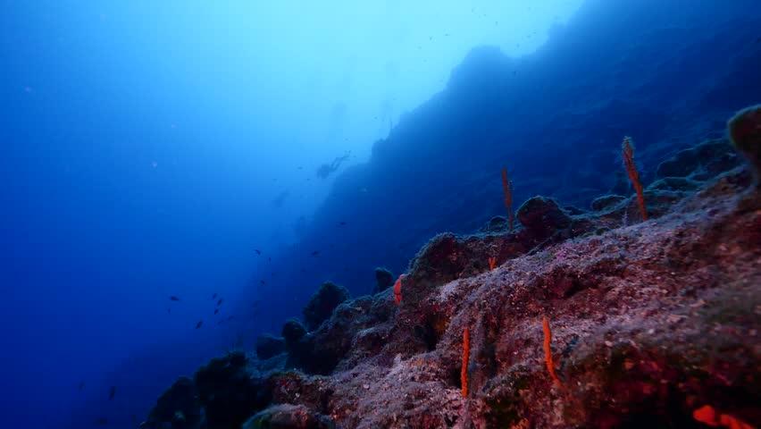 underwater scenery videos ansehen auf y8com - 852×480