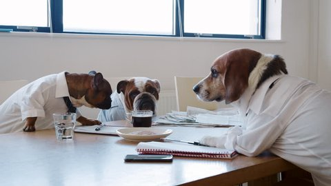 Three dogs having a meeting in a business meeting room