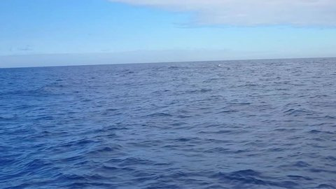 Humpback Whales (Megaptera novaeangliae) swim in Vitoria sea. Slow movements. Blue sky. Image in Espirito Santo, Brazil.