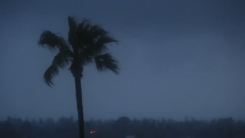 Palm tree in storm at night