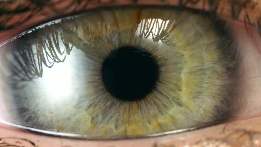 Extreme close up human eye in 4K UHD video. Human green iris contracting. Extreme close up. #1009729106