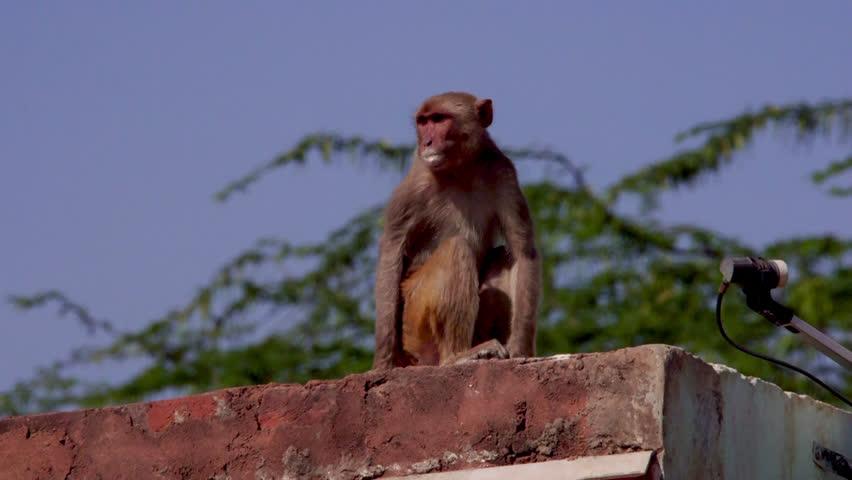 Header of monkey