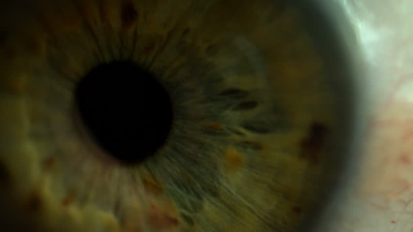 Attentive looking eye macro shot of pupil and iris | Shutterstock HD Video #1009779056