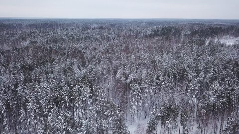 Beautiful winter landscape. A huge pine forest with tall trees in white snow. Aerial shot. 4K footage from drone.