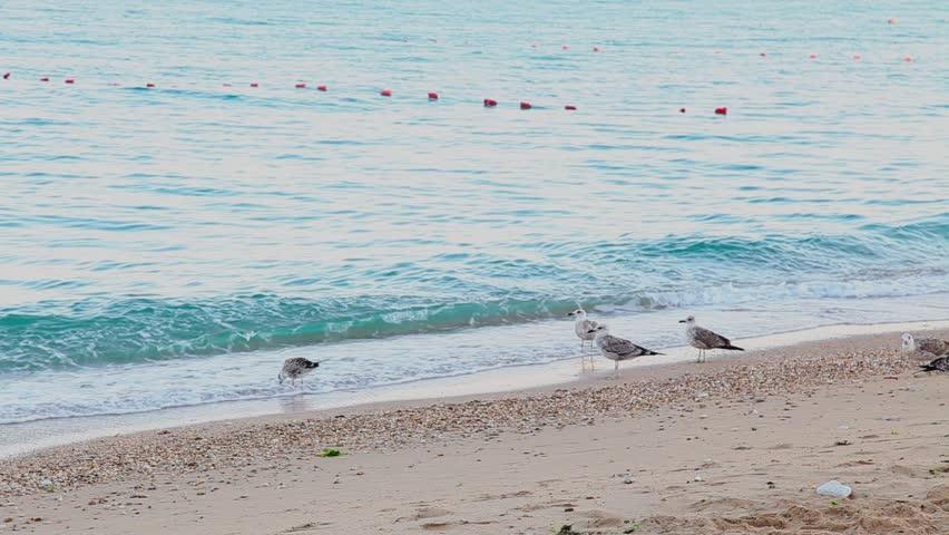 a gull to wait on the beach of the sea coast