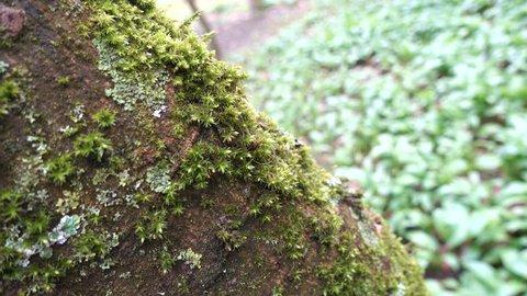 Moss on the tree