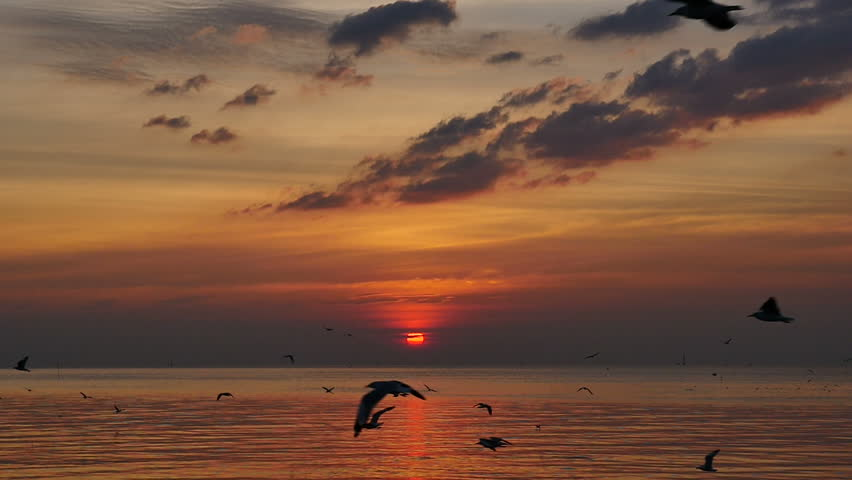 Seagulls Flying Above Sea At Sunset. (Slow Motion) | Shutterstock HD Video #1010110106