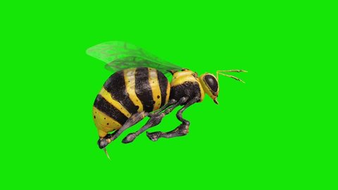 Bee Wasp Flies Loop Green Screen Side 3D Renderings Animations