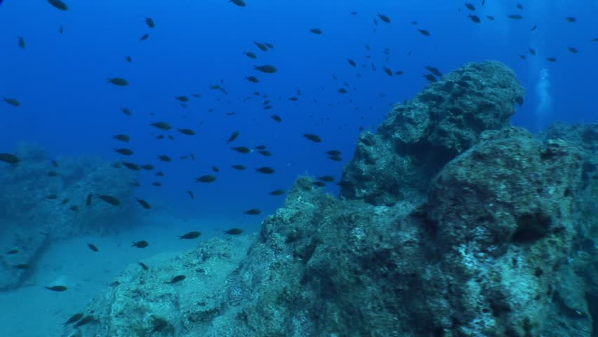 Underwater scenery blue water damsel fish school  | Shutterstock HD Video #1010177546